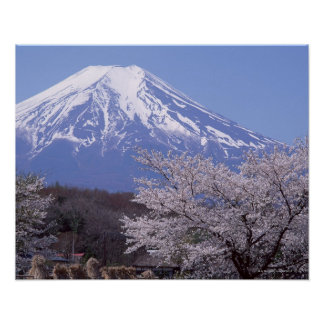 Flor de cerezo y el monte Fuji Póster
