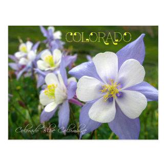 Flor de estado de Colorado: Montaña rocosa Postal