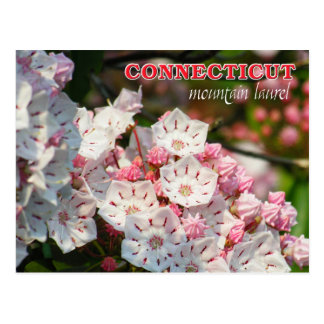 Flor de estado de Connecticut: Laurel de montaña Postal