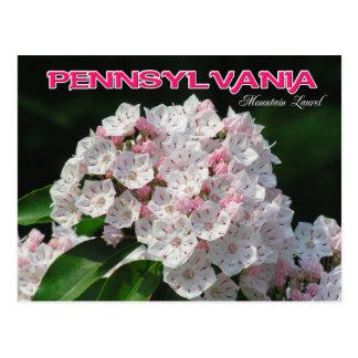 Flor de estado de Pennsylvania: Laurel de montaña Postal