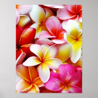 Flor de Hawaii del Frangipani del Plumeria Póster