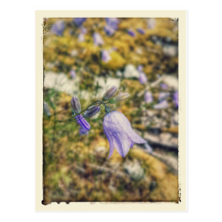 Flor de la montaña postal
