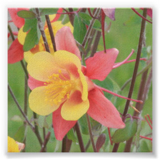 Flor de la montaña impresiones