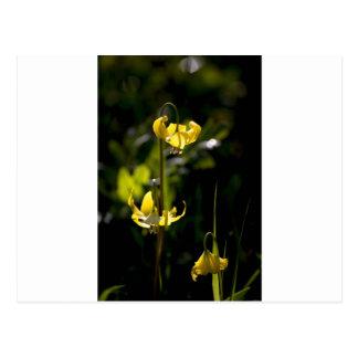Flor de la montaña tarjetas postales