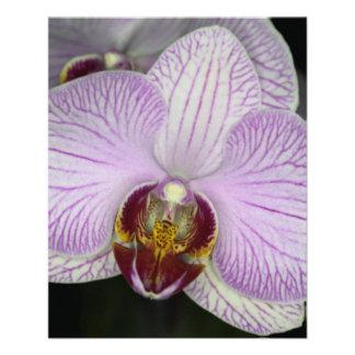 Flor de la orquídea tarjeton