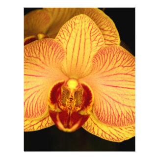 Flor de la orquídea tarjetones