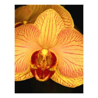 Flor de la orquídea flyer personalizado