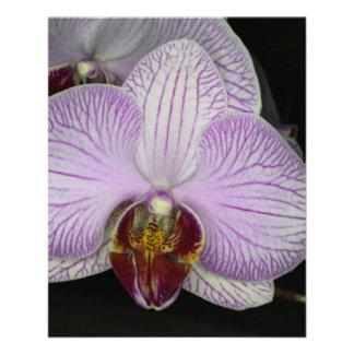 Flor de la orquídea tarjeta publicitaria