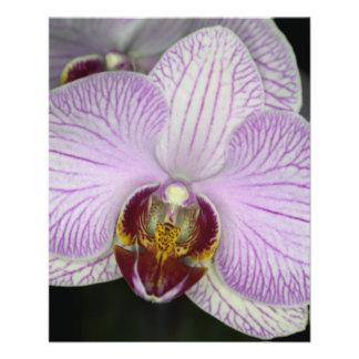 Flor de la orquídea tarjetón