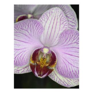Flor de la orquídea folleto 21,6 x 28 cm
