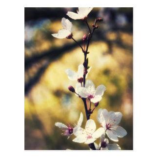 Flor de la primavera postales