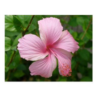 Flor de la República Dominicana Postal