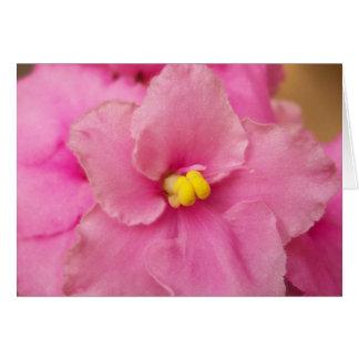 Flor de la violeta africana tarjeta pequeña
