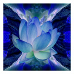 Flor de loto azul poster