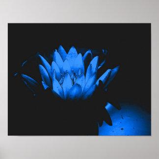 Flor de Lotus del lirio de agua azul que brilla in Poster
