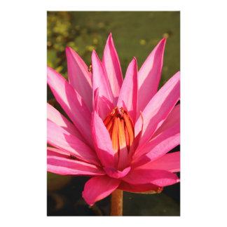 Flor de Lotus en la naturaleza Folleto 14 X 21,6 Cm