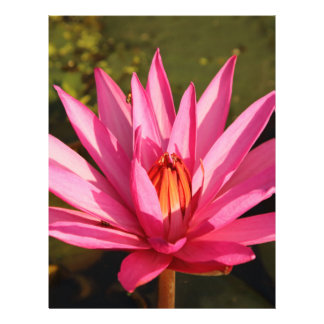 Flor de Lotus en la naturaleza Folleto 21,6 X 28 Cm