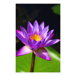 Flor de Lotus Folleto 14 X 21,6 Cm
