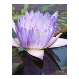 Flor de Lotus Tarjetas Informativas