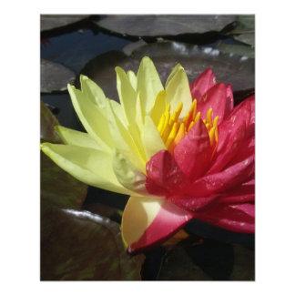Flor de Lotus Folleto 11,4 X 14,2 Cm