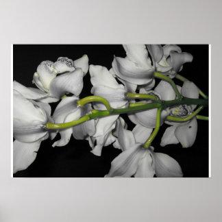 Flor de medianoche póster
