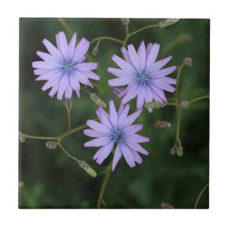 Flor de una lechuga de la montaña azulejo cuadrado pequeño