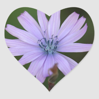 Flor de una lechuga de la montaña pegatina en forma de corazón