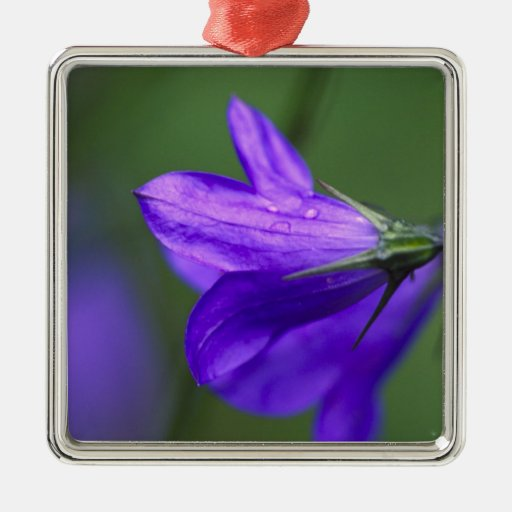 Flor del Bluebell en paso de la independencia aden Ornamento Para Reyes Magos