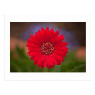 Flor del centro comercial postal