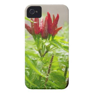Flor del chile funda para iPhone 4 de Case-Mate