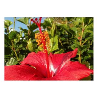 Flor del hibisco tarjetas de visita grandes