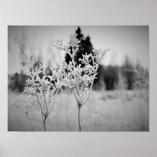 Flor del invierno blanco y negro póster