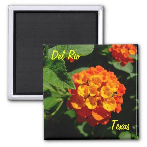 Flor del Lantana del imán de Del Río Tejas