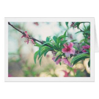 Flor del melocotón tarjeta pequeña