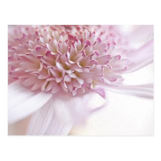 Flor del rosa en colores pastel postal