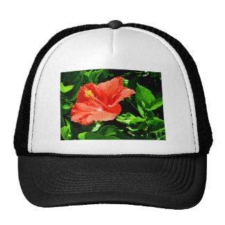 Flor del verano gorras