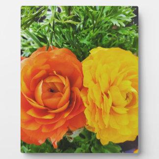 Flor doble del problema placa expositora