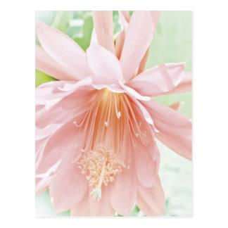 Flor en colores pastel bonita postales