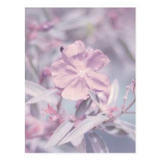 Flor en colores pastel suave de la lavanda tarjetas postales