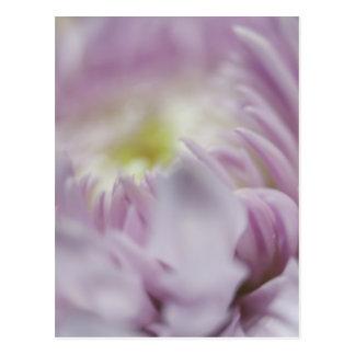 Flor en colores pastel suave de la lavanda postal