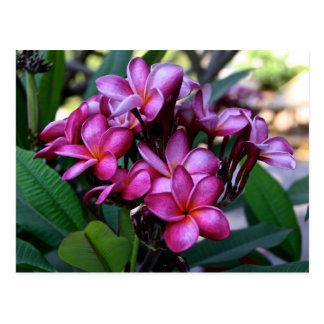 Flor exótica, postal