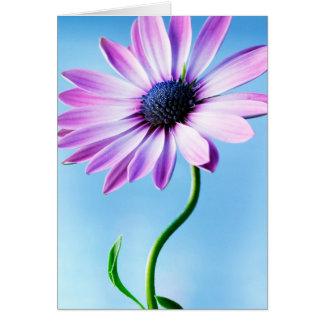 Flor floral de las margaritas de la flor de la tarjeta de felicitación