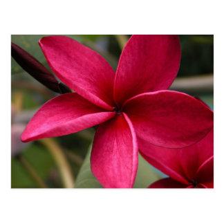 Flor hawaiana del pasto postal