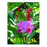 Flor hawaiana púrpura tropical postal