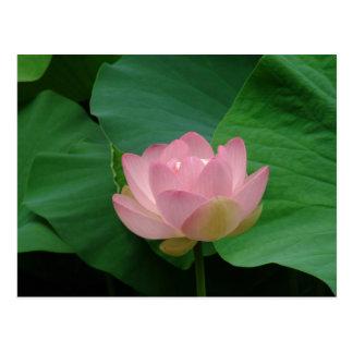 Flor hawaiana serena postal