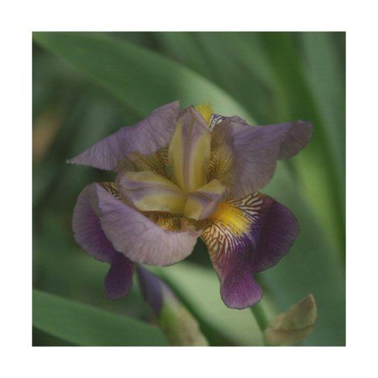 Flor, impresión de madera de la foto