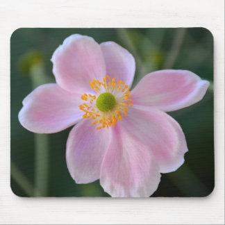 Flor japonesa rosada de la anémona alfombrilla de ratón