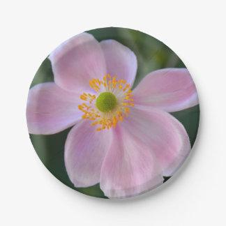 Flor japonesa rosada de la anémona plato de papel
