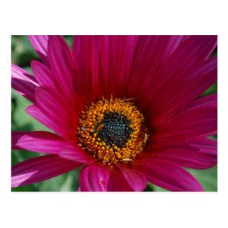Flor magenta postal
