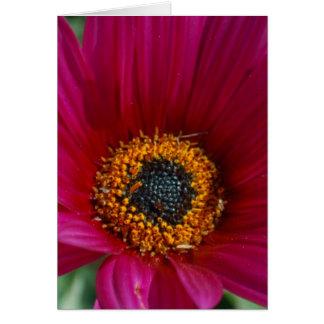 Flor magenta tarjeta de felicitación